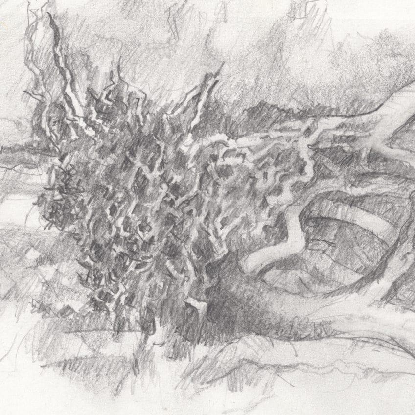 Jekyll Island Drawing (03)